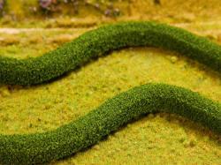 2 PREMIUM Decorative hedges/European hornbeams
