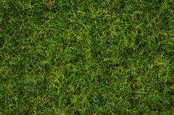 Grasmischung Sommerwiese 100g
