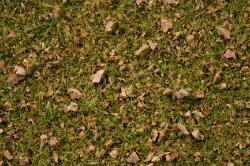 Grasmischung Almwiese 100g