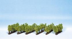 Weinreben, 24 Rebstöcke, 2,2 cm