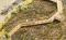 Busch 1068 Naturlehrpfad Hochmoor H0