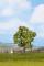 Noch 21550 Obstbaum grün 7,5 cm