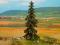 Noch 21922 Spruce Tree