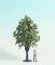 Noch 68022 Obstbaum weiß 30 cm